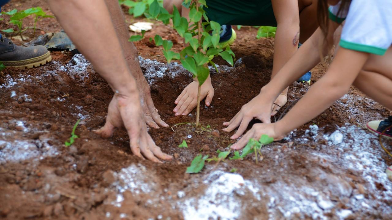 FMA comemora Dia da Árvore com doação de mudas no Parque Cesamar