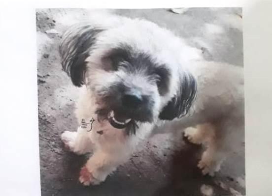 Família procura por cadela desaparecida em Paraíso do Tocantins