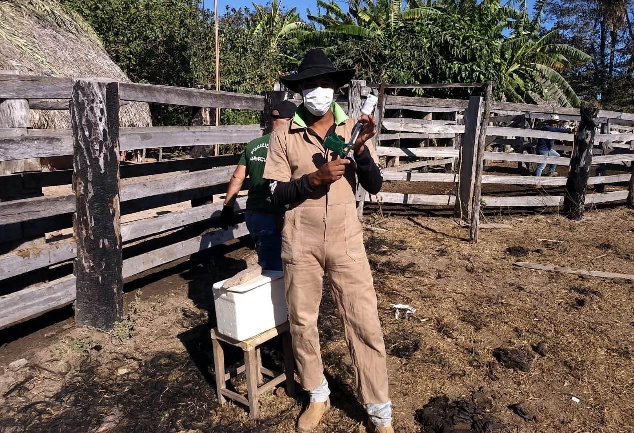 Mais de 116 mil bovídeos são vacinados na Ilha do Bananal