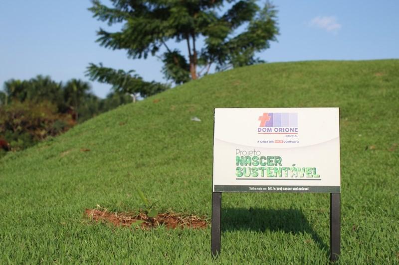 Hospital Dom Orione promove o plantio de mais de 6 mil mudas de árvores em Araguaína