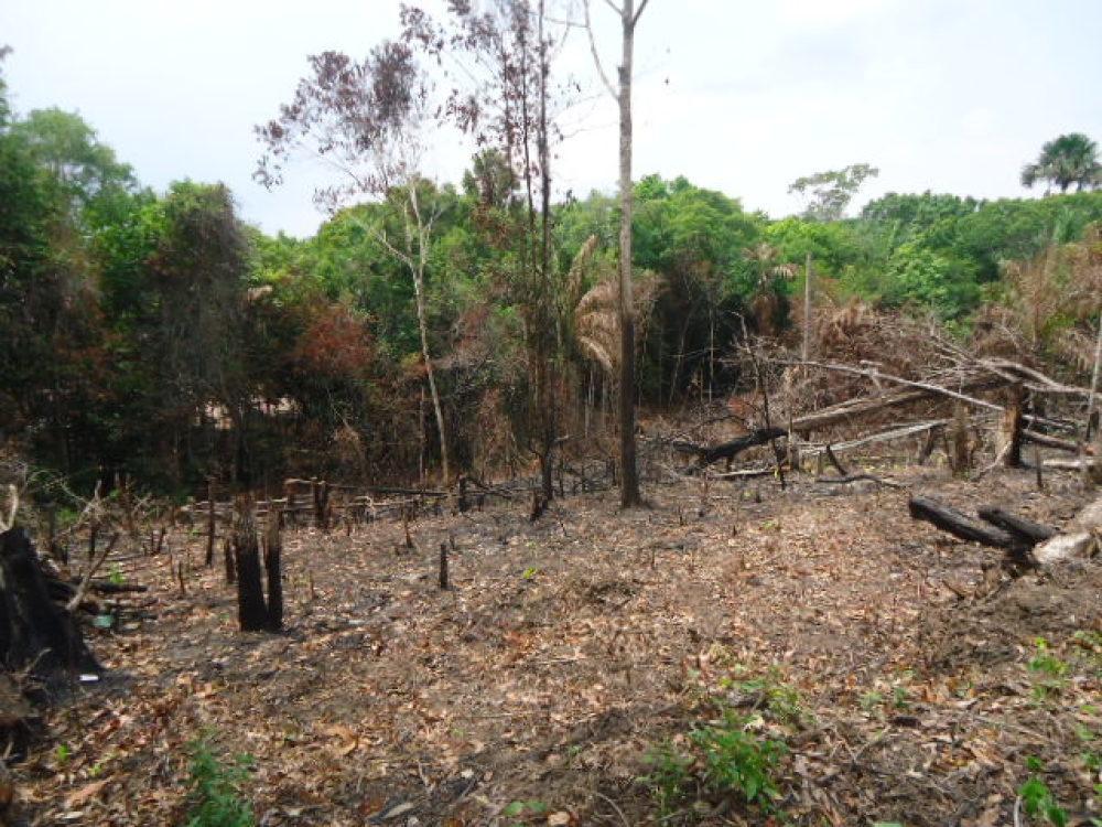 Tocantins reduz em 16% o desmatamento entre 2018 e 2019