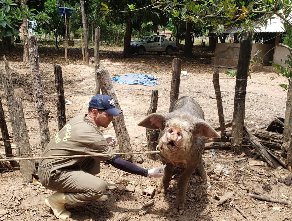 Ministério da Agricultura cria três zonas livres da PSC e inclui Tocantins em área de alta vigilância pelos limítrofes com estados não livres