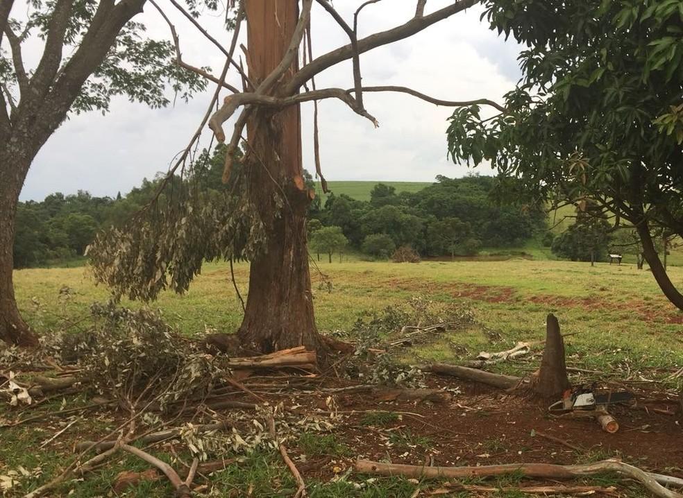 Homem morre após ser atingido por galho de árvore enquanto trabalhava em fazenda