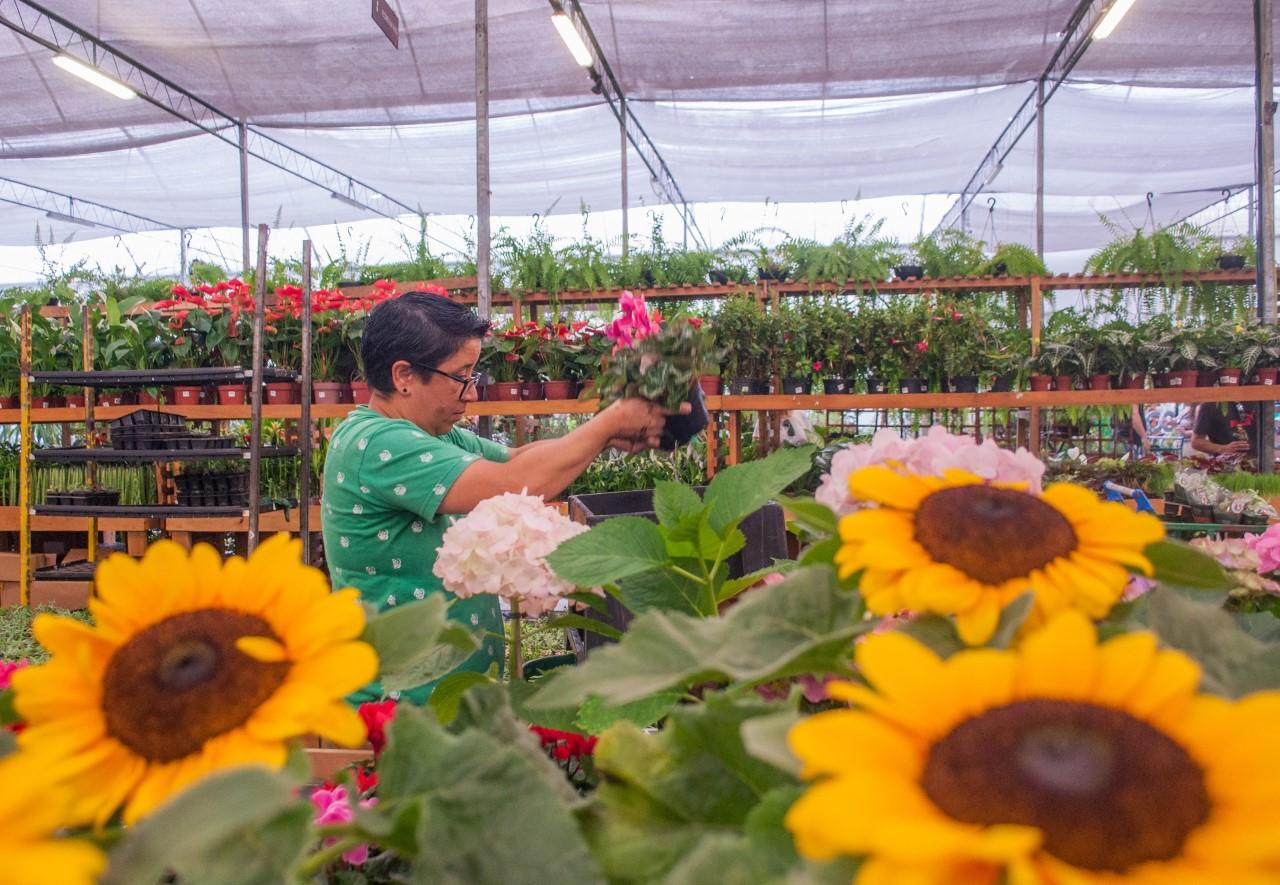 Maior rede de floriculturas do Brasil lança opção de venda via chamada de vídeo