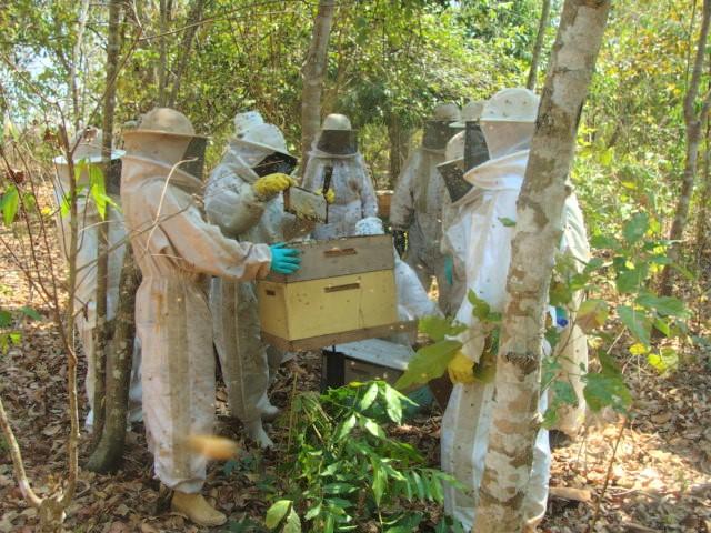 Investimentos científicos na área da apicultura tem sido uma realidade no Tocantins