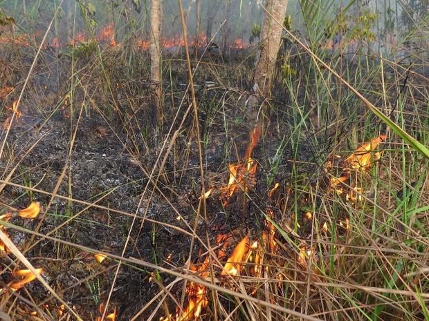 MPTO vai apurar a aplicação das políticas de proteção ao meio ambiente pelos danos causados por queimadas