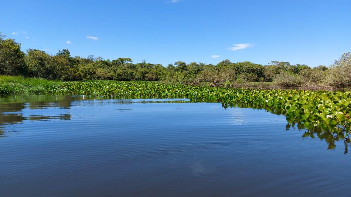 Assentamento de Araguacema ganha mutirão de limpeza e pomar comunitário no Dia Mundial do Meio Ambiente