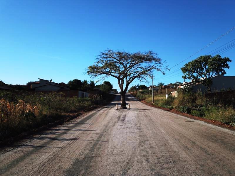 Cajazeira da Avenida Piracicaba será preservada, afirma Prefeitura de Paraíso
