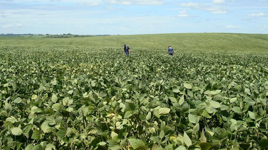 Brasil retoma posto de maior produtor de soja do planeta