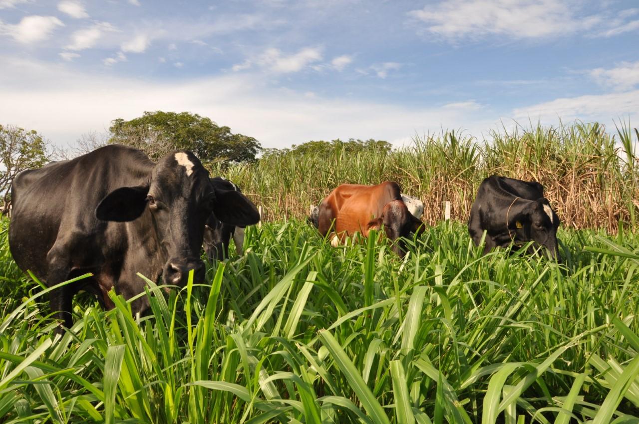 Rebanho bovino do TO volta a crescer e produção de ovos bate recorde, revela pesquisa do IBGE