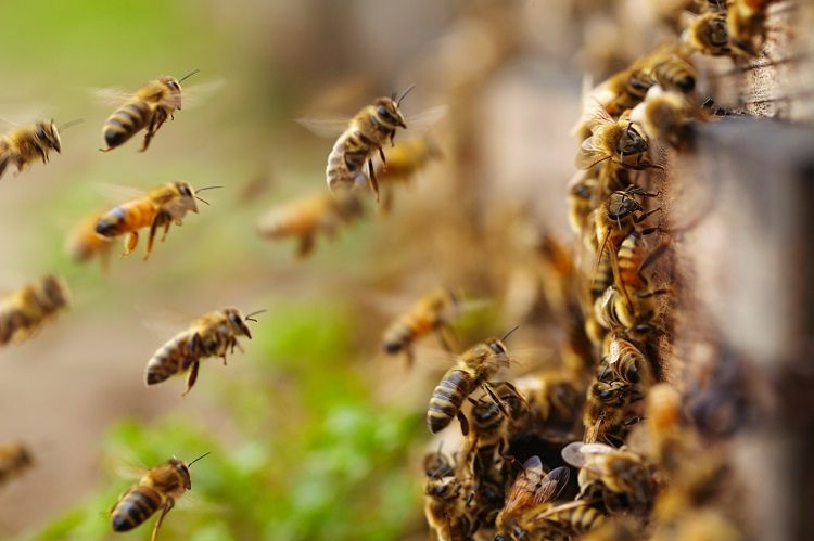 Homem é encontrado morto e com marcas de picadas de abelhas, no sul do Tocantins