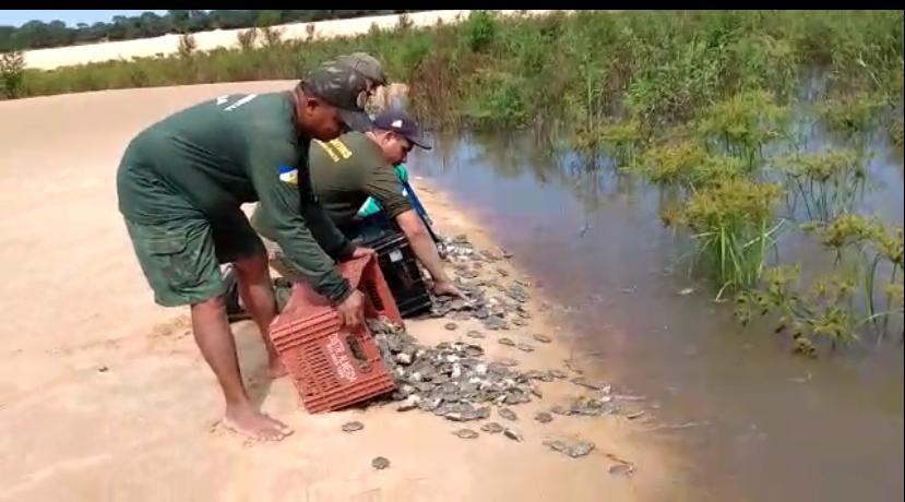 Parceiros do projeto Quelônios do Tocantins visitam local de soltura de filhotes