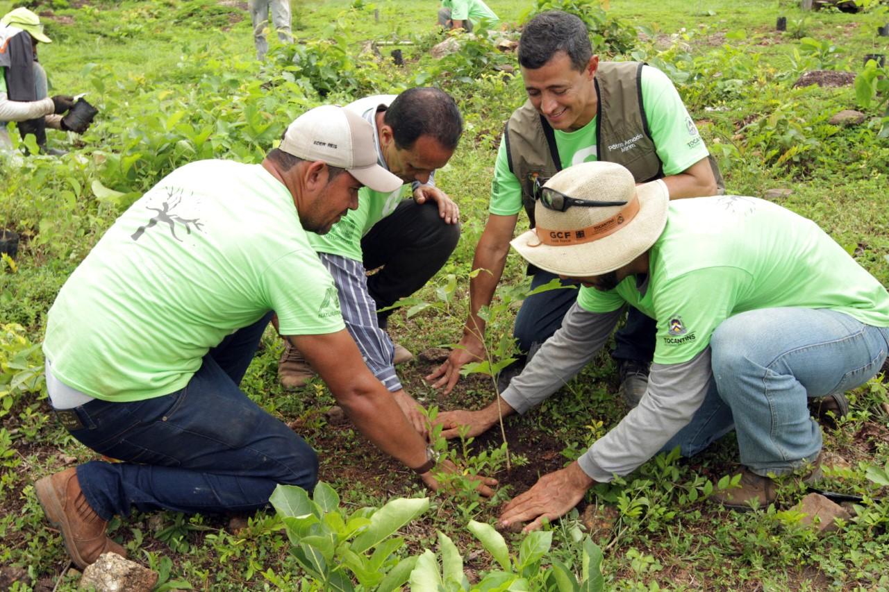 Governo do Estado inicia o plantio de mudas no Parque Estadual do Lajeado em parceria com ONG 8 Billion Trees