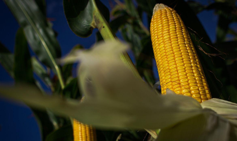 Produção agropecuária de 2020 cresce 17% e alcança R$ 871 bilhões