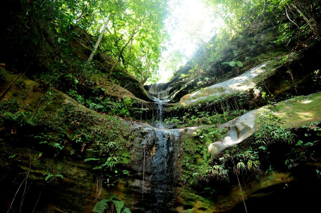Mês do Meio Ambiente é comemorado com ações no Tocantins
