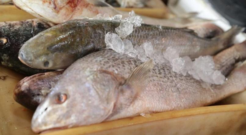 Doença da urina preta faz mais uma vítima no Brasil; mulher fica entre a vida e a morte após comer peixe
