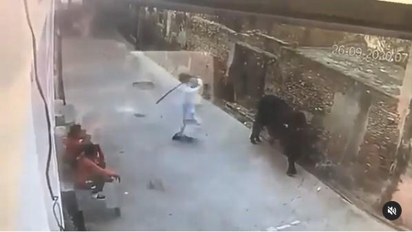 Em vídeo impactante, homem ataca boi com pedaço de madeira e animal revida