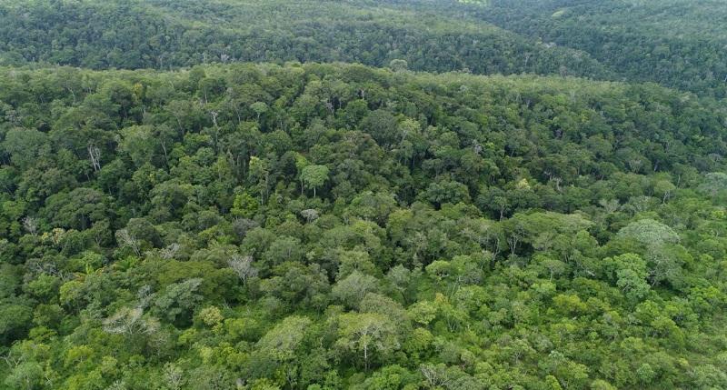 Tocantins se credencia junto ao Banco Alemão de Desenvolvimento para concorrer ao edital Fundo Floresta