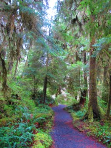 Lush forest in the Quinault Lake area