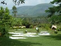 Du linge sèche dans le jardin de la guesthouse Chandoori Sai, dans le sud de l'Orissa