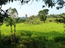 Rizière du sud de l'Orissa
