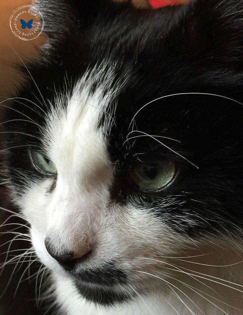 surprisinglives.net/purr-smile-cats/