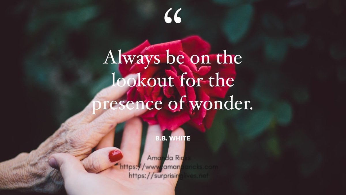 looout for presence of wonder quot