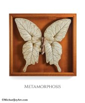 8-Metamorphosis