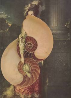 Fibonacci's Folly Collage by Deborah Stevenson