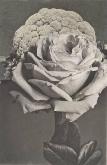 Surreal Bloom Collage by Deborah Stevenson