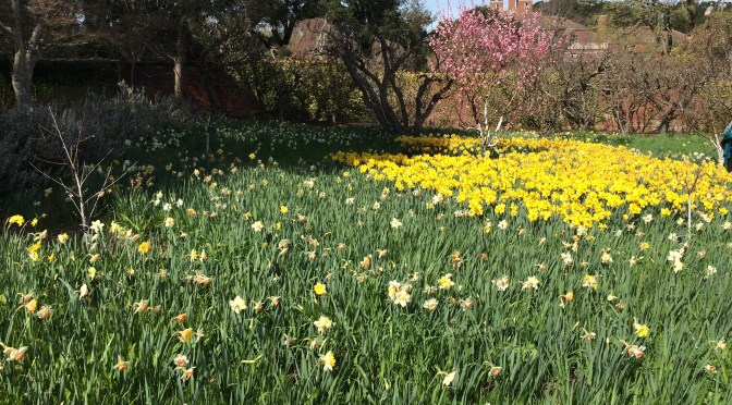 Celebrating the Twins Birthday at Daffodil Dreams At Filoli Gardens