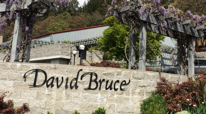David Bruce Winery in the Santa Cruz Mountains