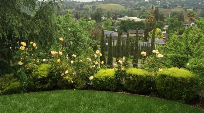 Swati & Tarak's Italian Inspired Hillside Garden Retreat