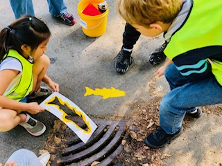 Protecting our storm drains