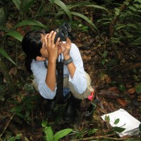 No experience necessary: how studying tamarins led to an innovative research organization in the Amazon