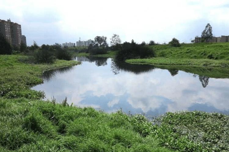 humedales de bogotá, medio ambiente, bosques, aguas residuales, tratamiento de aguas, roedores,
