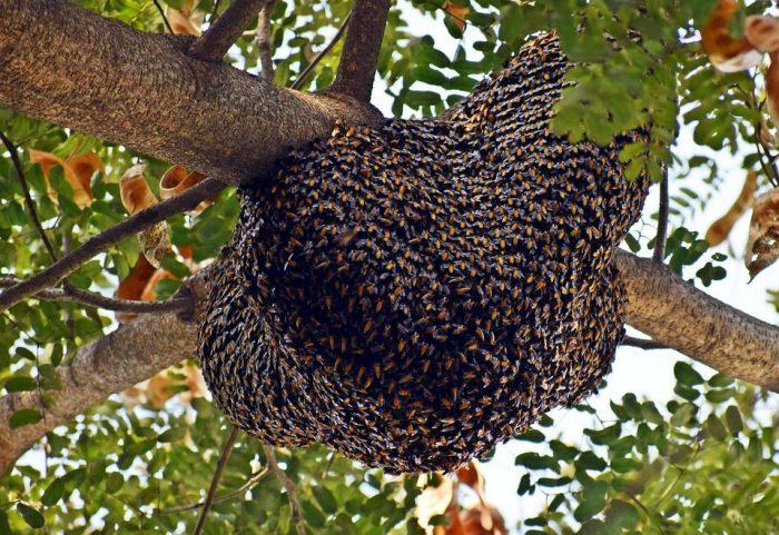 Bienen: Bienenwachs Honig Propolis Gelée Royale Apitherapie und Bienenzucht Imker Imkerei Königin