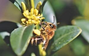 Bienen: Bienenwachs Honig Propolis Gelée Royale und Apitherapie
