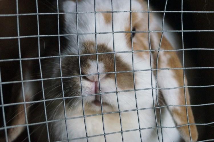 Zum Prepper werden - in 20 einfachen Schritten - der ultimative Leitfaden Kaninchen Kisenvorsorge