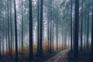 Verlaufen - Verirrt im Wald
