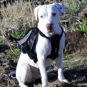 dog-backpack