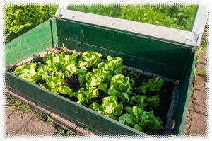 Survival Gardening: Survival Garden Cold Frames
