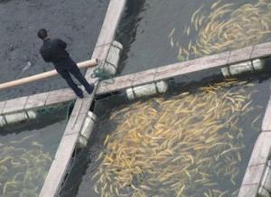 Raising Fish