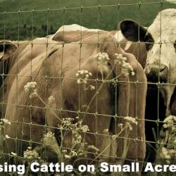 Raising Cattle on Small Acreage
