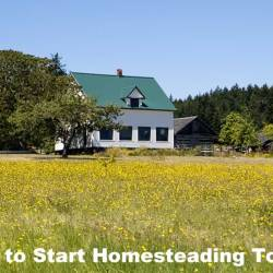 How to Start Homesteading Today!