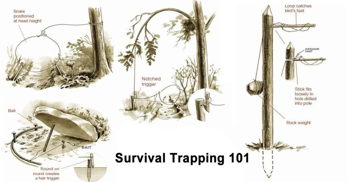 Attractive Snare Wire Trap Gallery - Electrical and Wiring ...