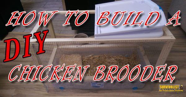 How to Make a Homemade DIY Chicken Brooder Cheap