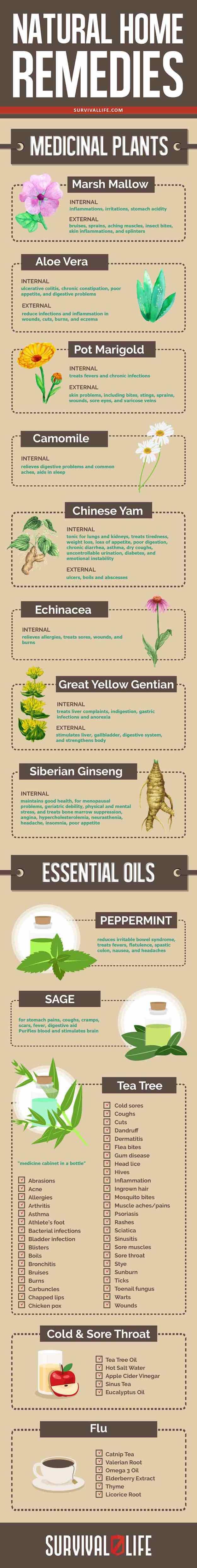 Medicinal Plants You Need To Make Natural Home Remedies   https://survivallife.com/medicinal-plants-home-remedies/