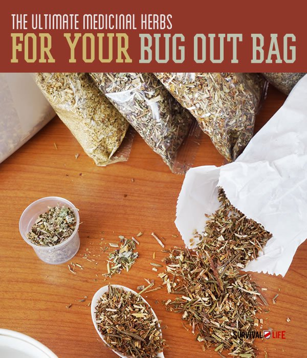 Placard Medicinal herbs | The Top Ultimate Medicinal Herbs For Your Bug Out Bag