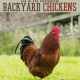 Raising Backyard Chickens   How To, Tips and Ideas